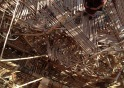 inside big bambu 052014