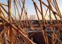 big bambu view